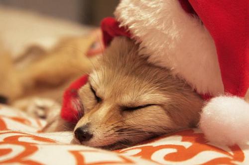Santa by deadstardro