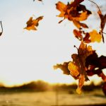 A November 'how are you?' & letting mindfulness centre you